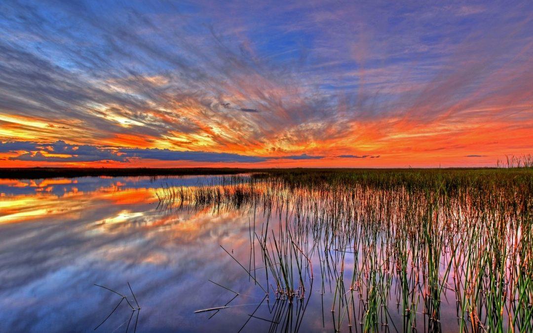 Case Study | Pasco County Office of Tourism Development | Citrus County Convention & Visitors Bureau (FL)