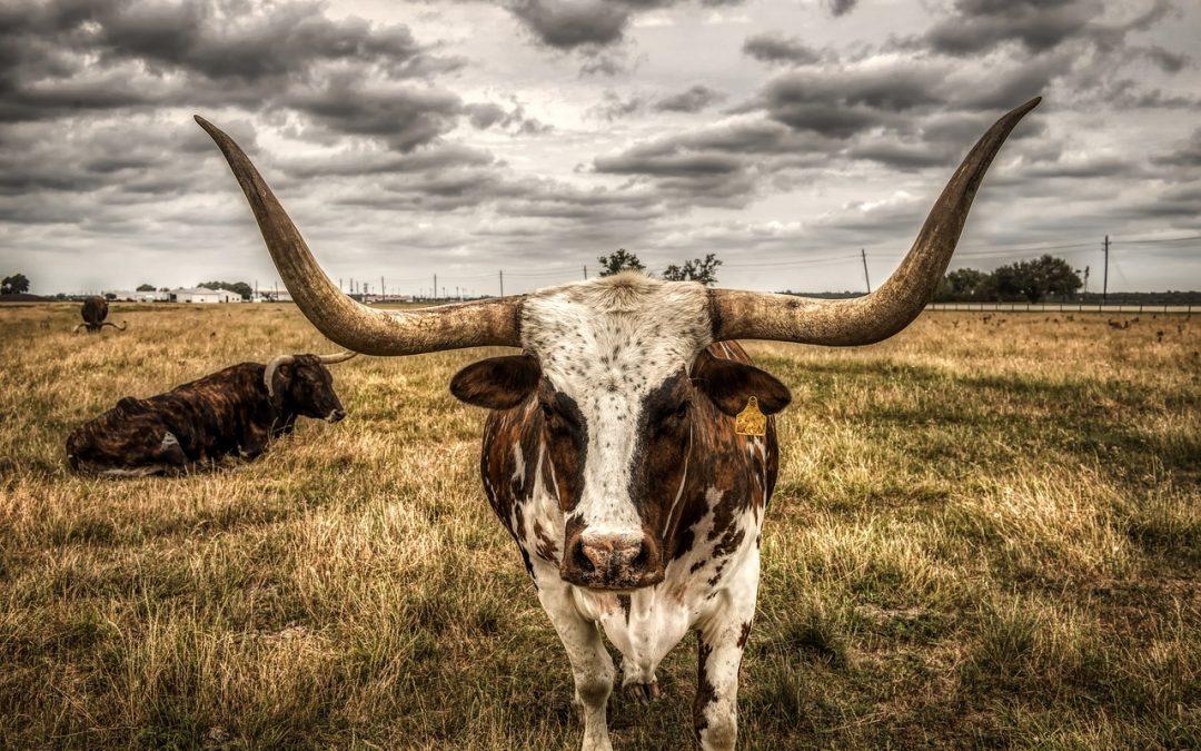 Case Study | Visit Granbury Inc. (TX)